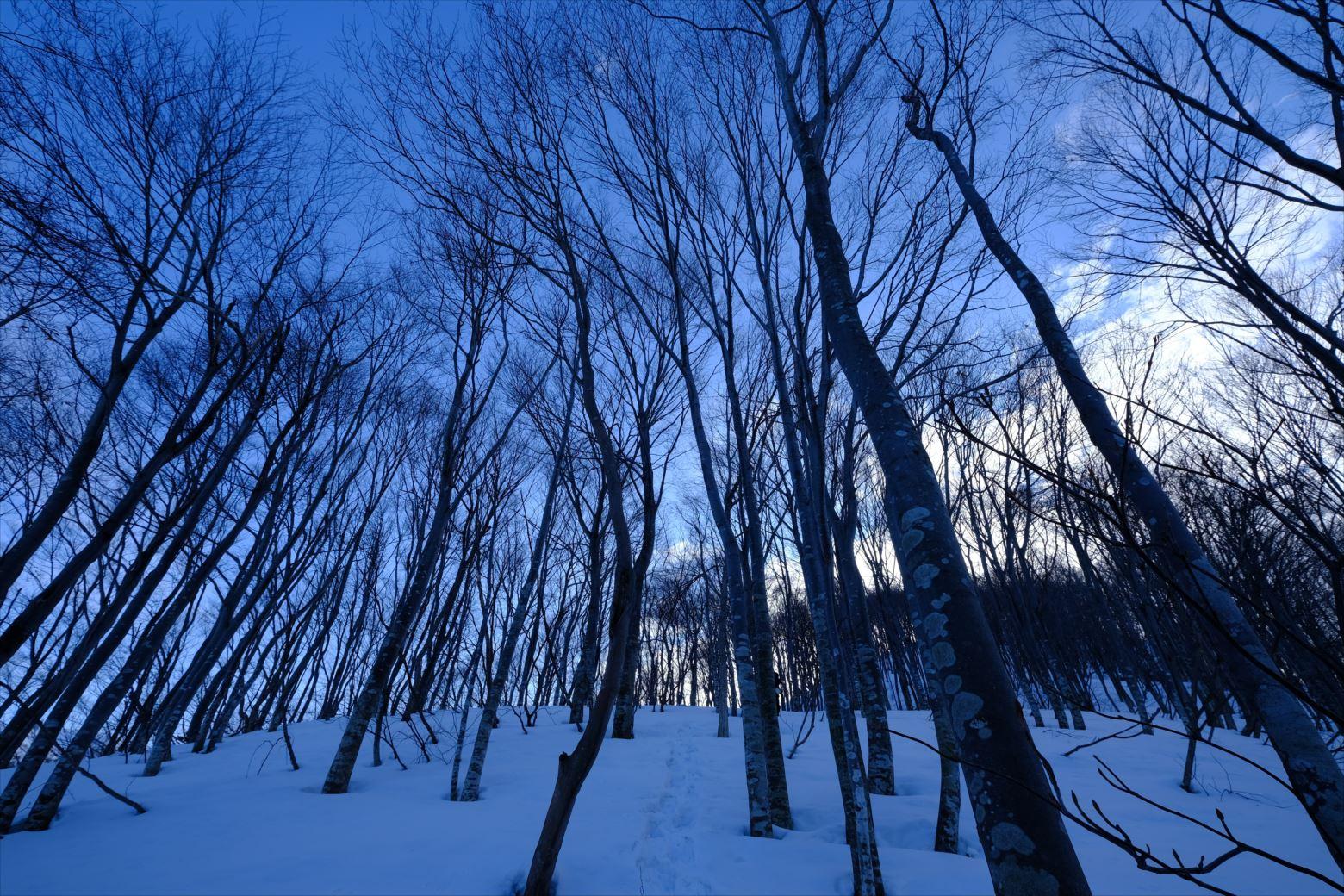 【厳冬期・雪山登山】守門岳 (12)