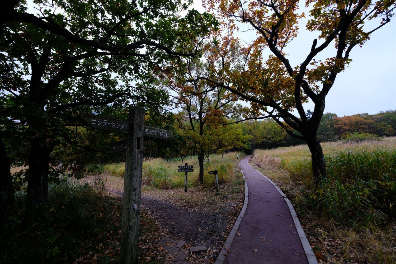 【紅葉登山】くじゅう連山(大船山) (4)