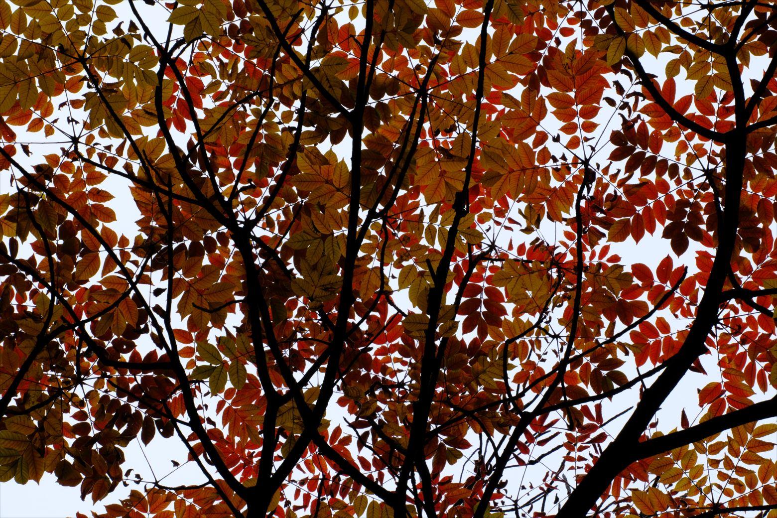 【紅葉登山】安達太良山 (86)