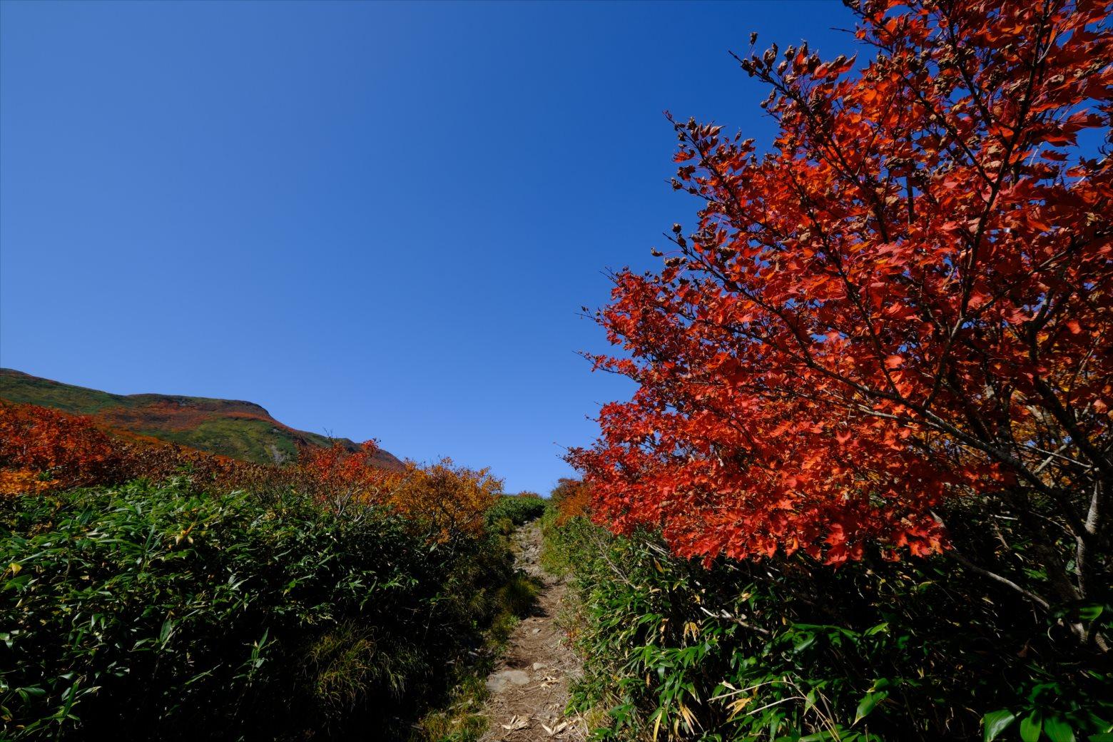 【紅葉登山】焼石岳 (34)