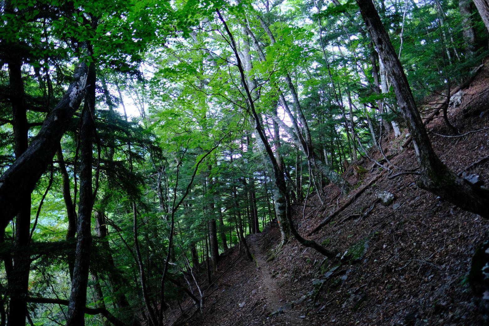 【秋山登山】赤石岳・荒川三山 (164)