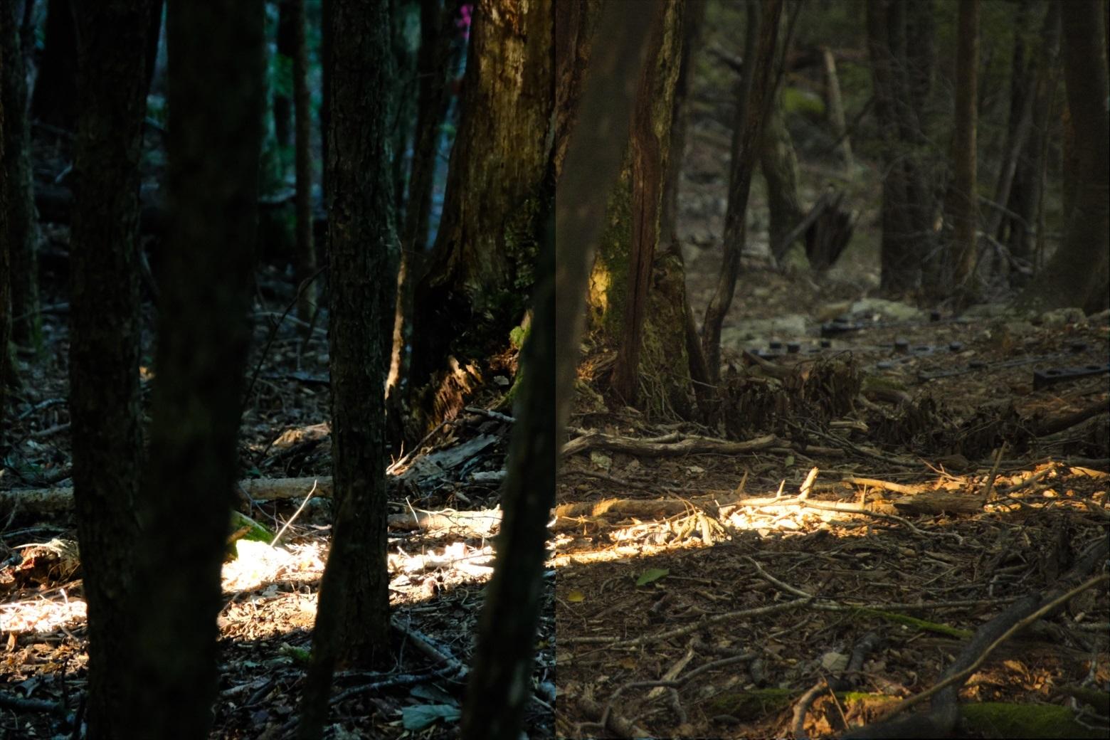 写真現像ソフトLuminar4「魔法の森(magical forests)Looks」の実例紹介