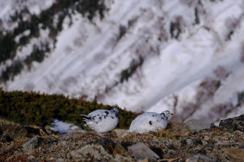 この画像には alt 属性が指定されておらず、ファイル名は 【残雪期・雪山登山】鹿島槍ヶ岳-73.jpg です