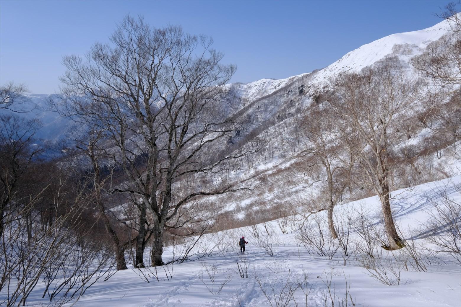 【厳冬期・雪山登山】仙ノ倉山 (47)