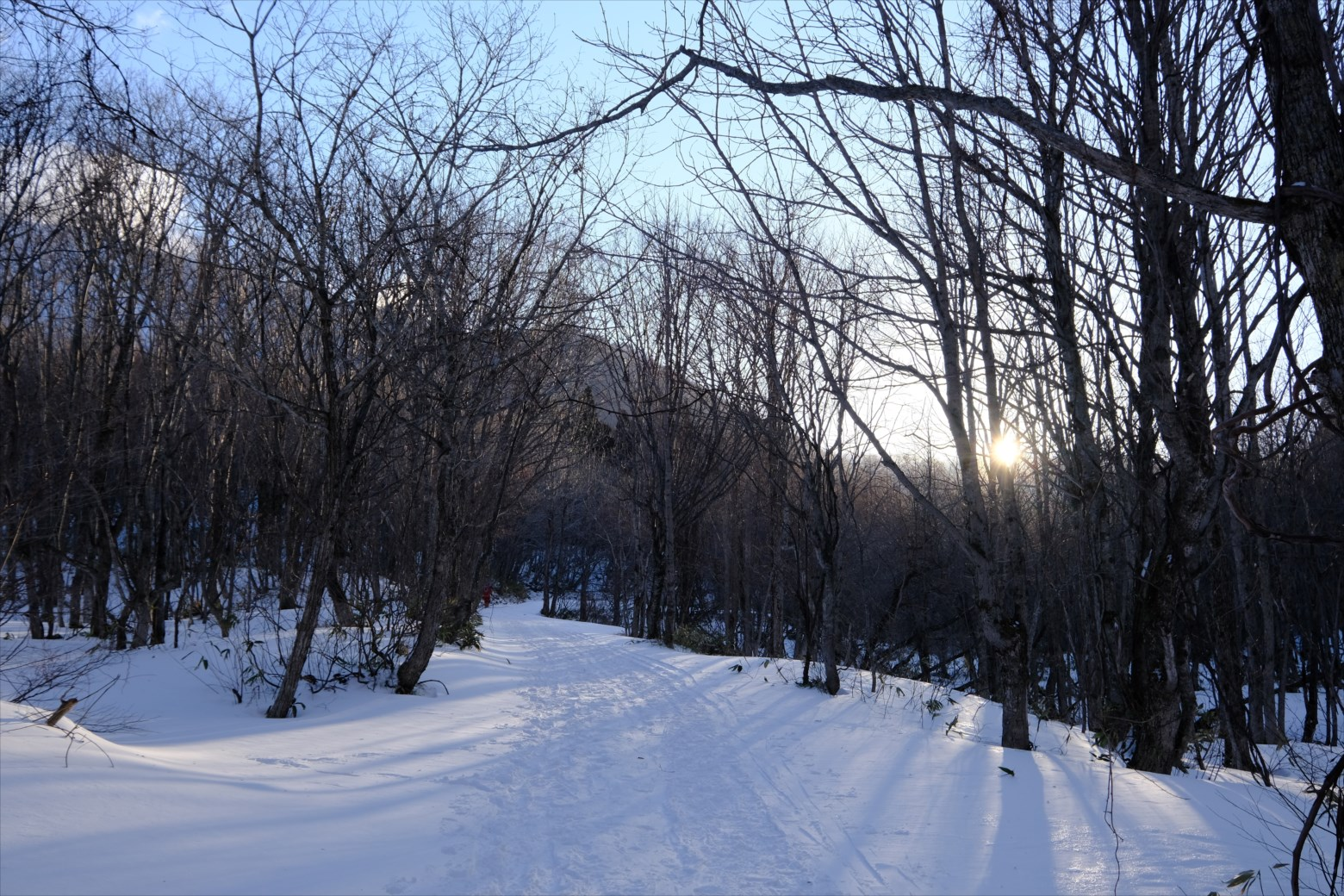 【厳冬期・雪山登山】仙ノ倉山 (5)