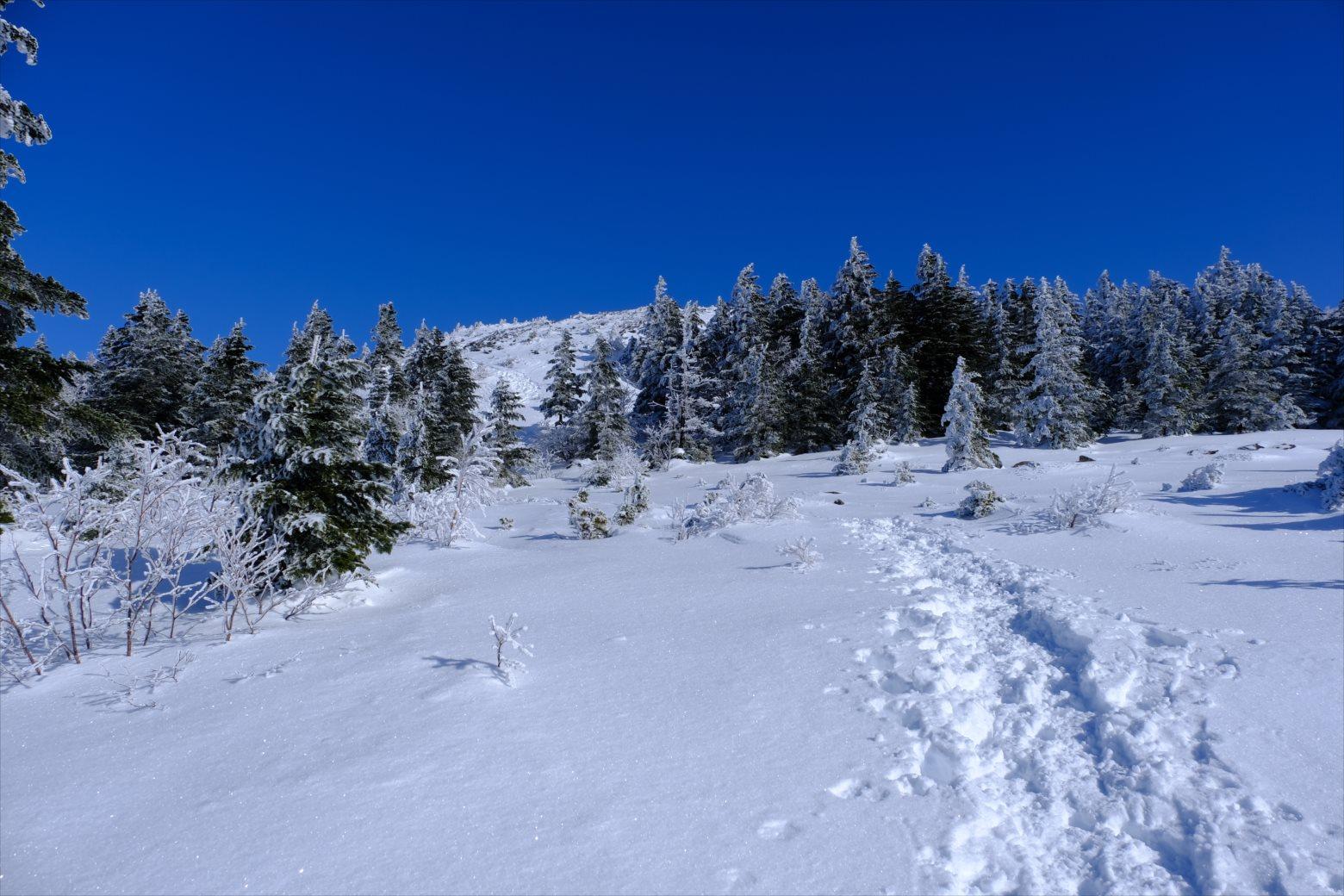 【厳冬期・雪山登山】四阿山 (32)