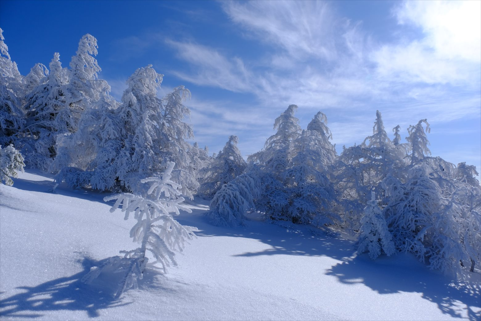 【厳冬期・雪山登山】四阿山 (33)