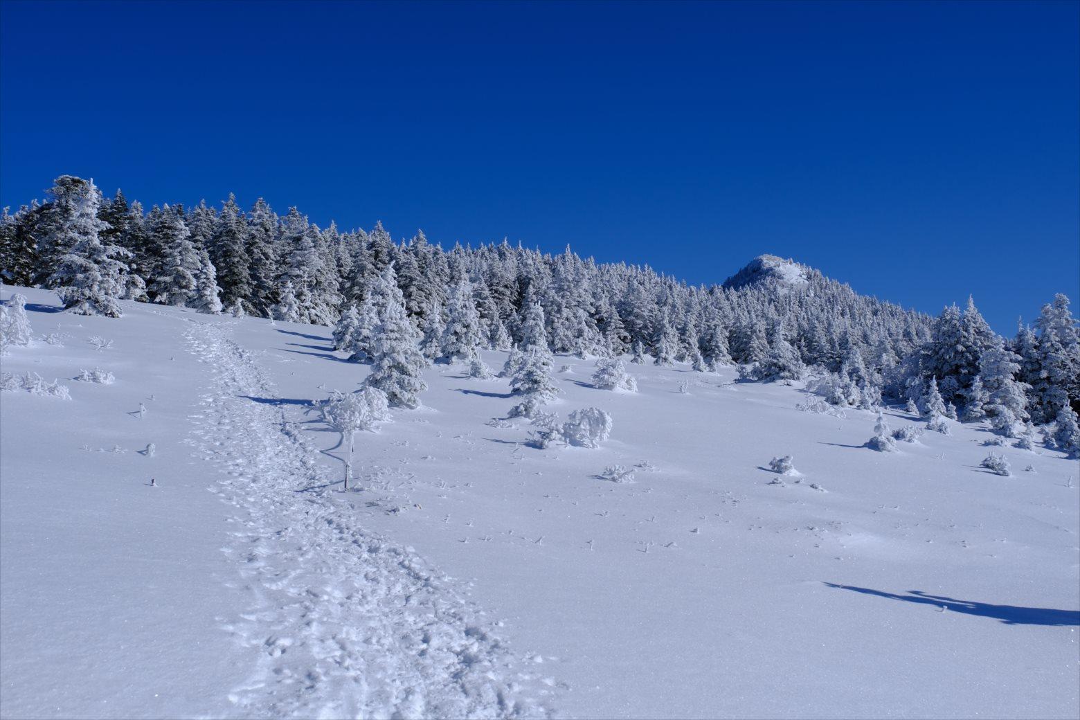 【厳冬期・雪山登山】四阿山 (37)