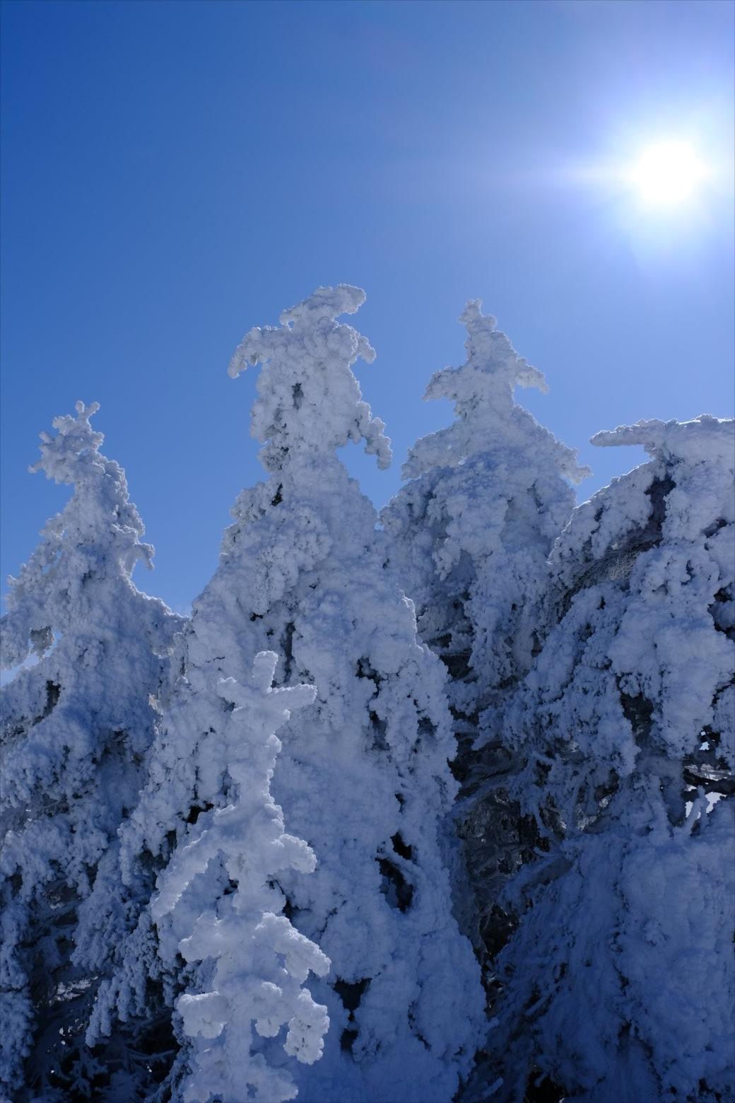 【厳冬期・雪山登山】四阿山 (54)