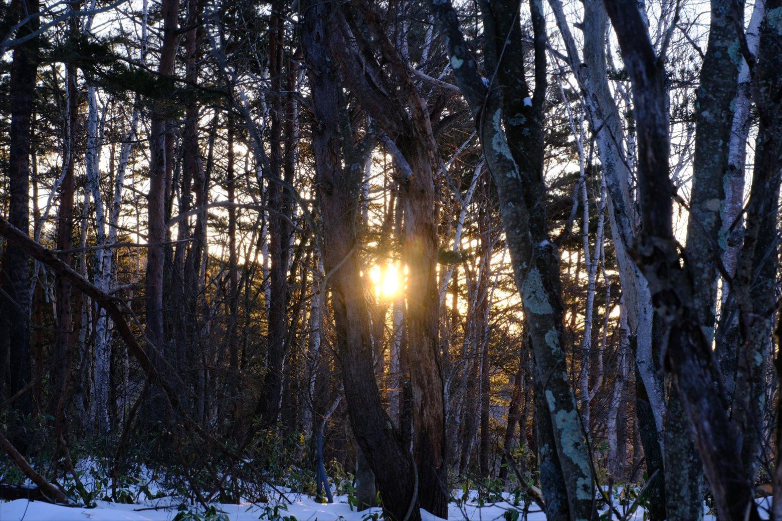 【厳冬期・雪山登山】四阿山 (6)