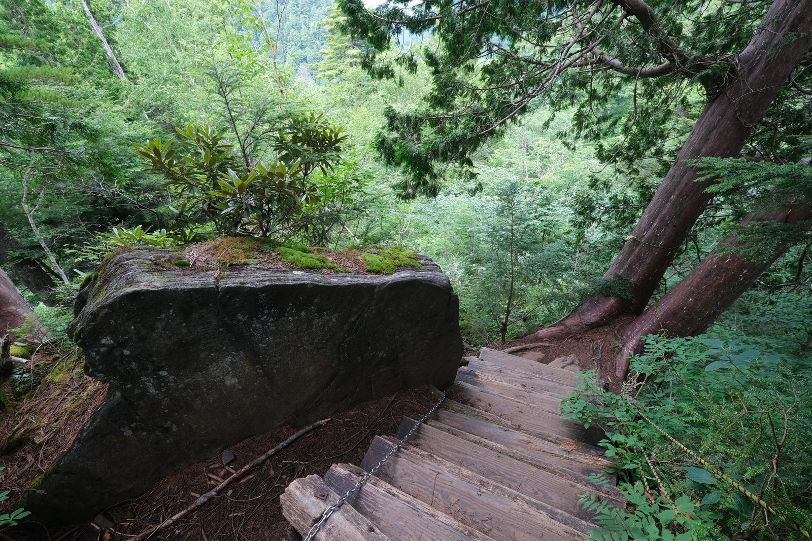 【夏山登山】尾瀬ヶ原、至仏山 (53)