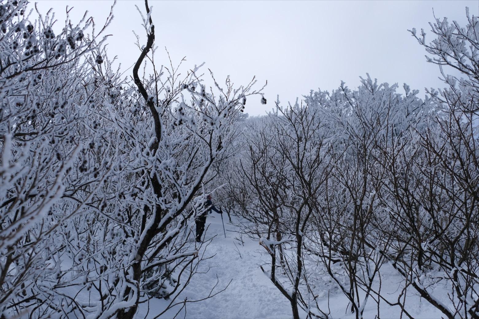 【残雪期・雪山登山】伯耆大山 (13)