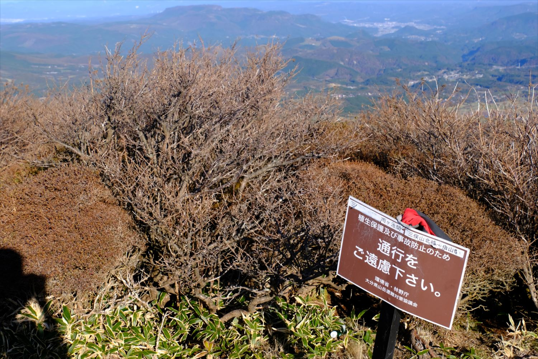 【紅葉登山】くじゅう連山(三俣山) (25)