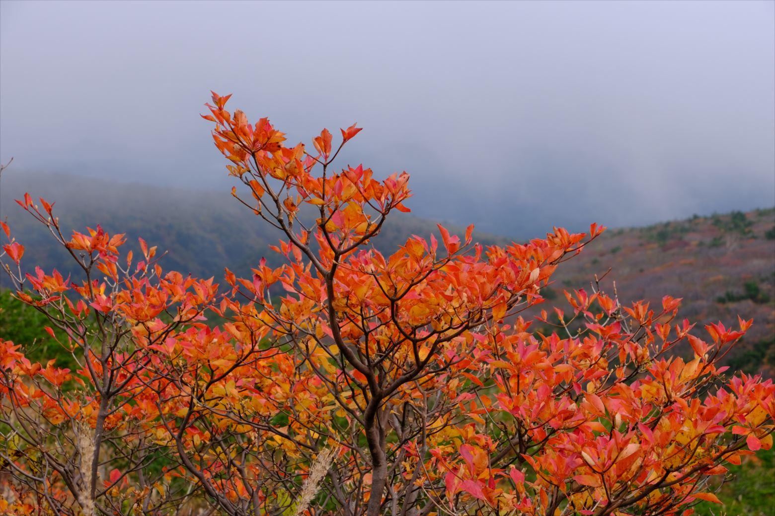【紅葉登山】安達太良山 (73)