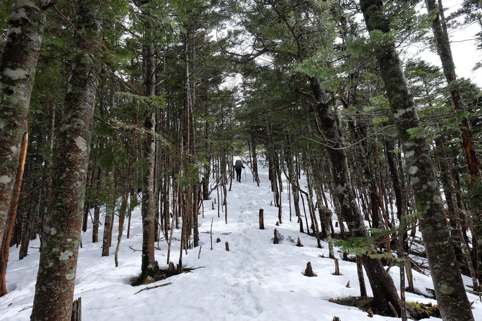 【山岳遭難体験記】誰もいない雨の標高2,500mで同行者が低体温症になった話
