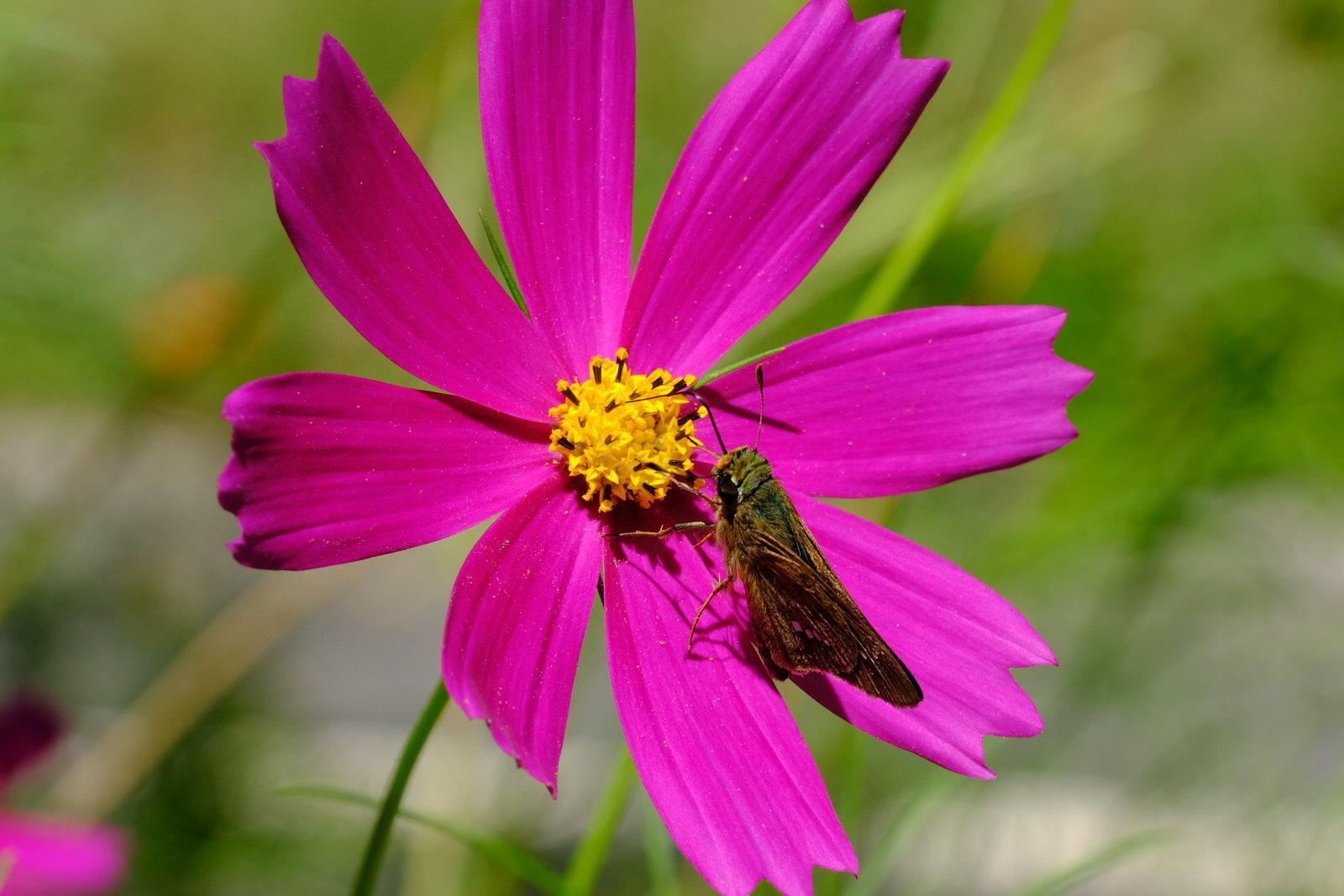 花・高山植物の撮り方のコツ~絞り、露出補正、シャッター速度~